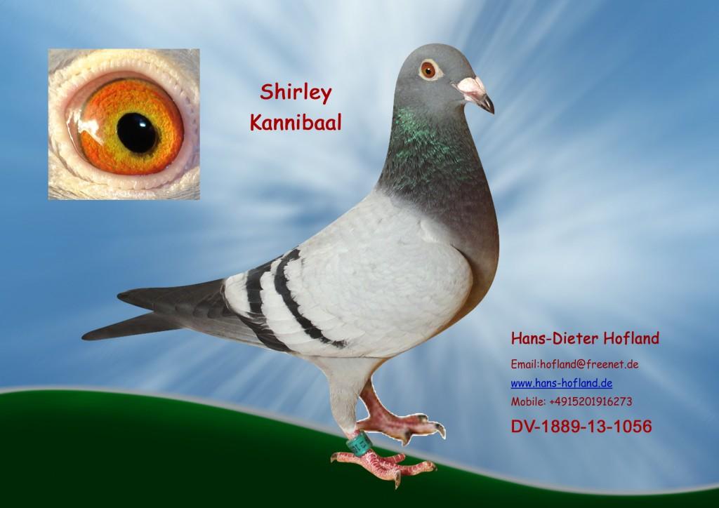 shirley DV-1889-13-1056